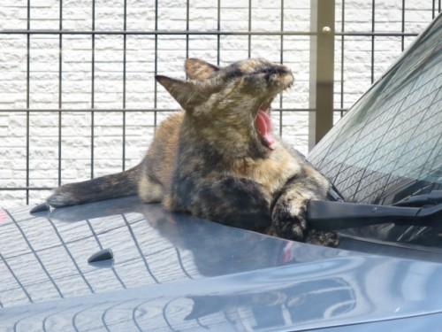 ご近所のネコ|IMG_1884