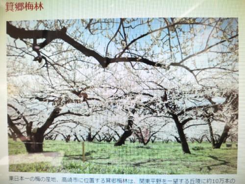 高崎市梅祭り|IMG_0961
