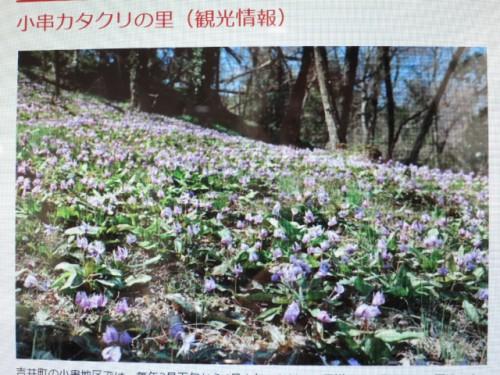 カタクリ咲いたまつり|IMG_1899