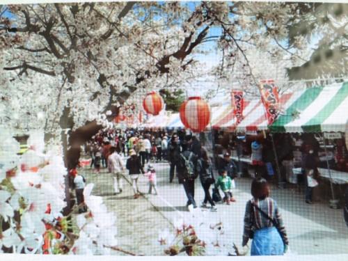 しんまち桜まつり|IMG_2207