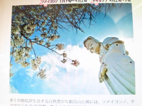 高崎の桜|IMG_2621