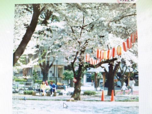 高崎の桜|IMG_2622