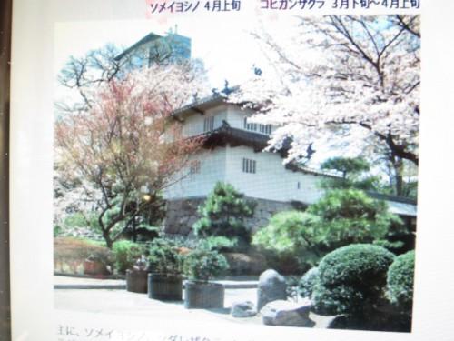 高崎の桜|IMG_2623