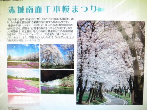 赤城南面千本桜まつり|IMG_2908