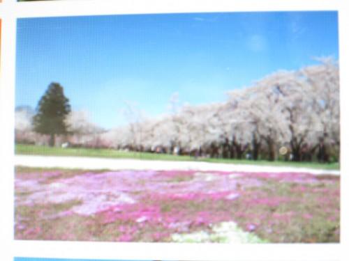 赤城南面千本桜まつり|IMG_2910