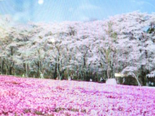 赤城南面千本桜まつり|IMG_2912